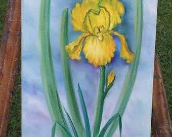 One Yellow Iris