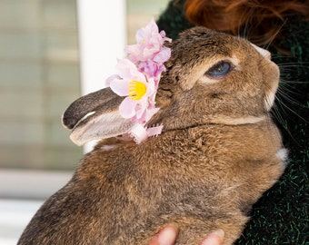Summer Breeze Pet Flower Crown