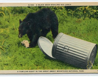 Black Bear Stealing Lunch Trash Can Great Smoky Mountains National Park linen postcard