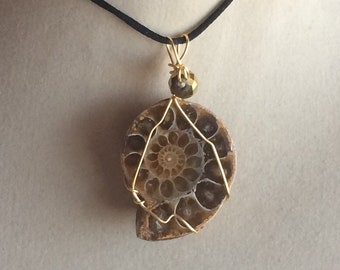 Ammonite Shell Pendant Wire Wrapped Necklace Jewelry