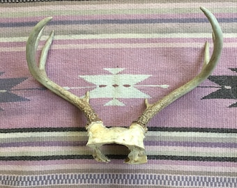 Deer Antlers Taxidermy Real Antlers With Skull Southwestern Boho Home Decor Wall Hanging