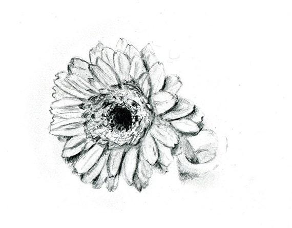 Items similar to Pencil drawing of a gerbera daisy