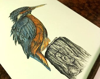 Pen and Ink Kingfisher Illustration