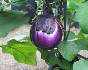 ITALIAN EGGPLANT VEGETABLE *20 Seeds* High Quality Seed, Easy To Grow, Fresh Seed  Fresh Quality Seed & High Germination