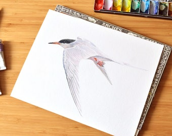 Tern Watercolor Print, Fine Art, Roseate Tern, Canadian Seabird, Maritime Wall Hanging