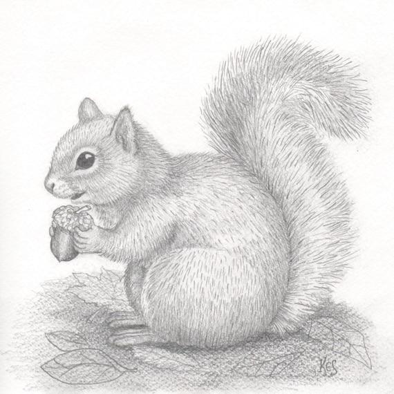 Squirrel & Acorn art. An original pencil drawing of a squirrel