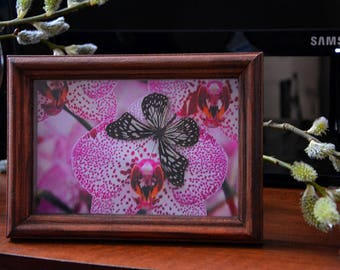 Tropical Butterfly Collage on the wall  Ideopsis Juventa  with  photo of Orchid Butterfly in frame   2017