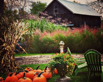 Picture Perfect Autumnal Display on a Quaint Farm