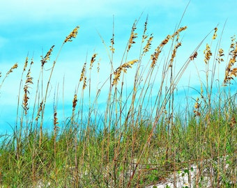 Sea Oats. Beach cottage or beach lover decor.
