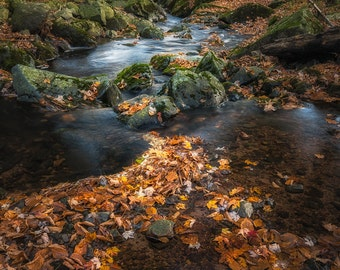 Autumn Photography, Woodland Creek, Waterfall, Fairy Tale, Fine Art Print, Magical Scene, Earthy Tones, Fall Color, Autumn Leaves, Wisconsin