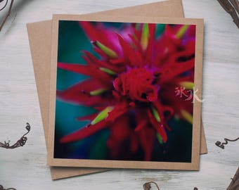 Indian Paintbrush Photo Card - Castilleja - Passion in red...
