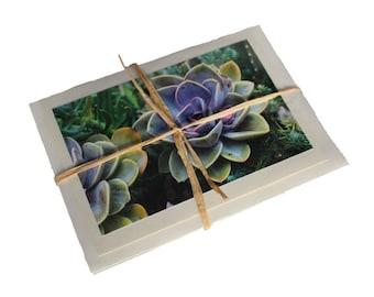 Set of 4 Succulent Plant Photo Notecards (Blank)