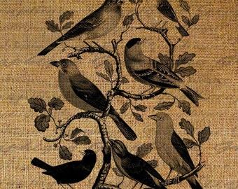 Birds On Tree Bird Digital Image Download Sheet Transfer To Pillows Totes Tea Towels Burlap No. 2138