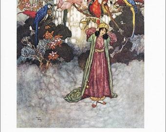 Beauty and the Beast vintage art nouveau print illustration folk tale parrots exotic birds Edmund Dulac 8.5x11.5 inches