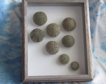 Sea Urchin Wall Art