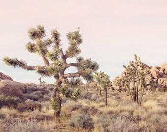 Joshua Tree, Cactus Wall Art Print, Pastel Boho Decor, Southwestern Decor, Cactus Print, California Desert Photography Print, Boho Print JT5