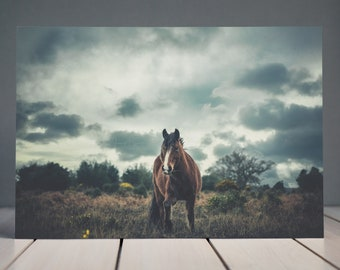 New Forest Horse Photography | Equine Fine Art Horse Print | Horse Photography | Home Decor Print | Horse Wall Art