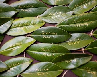 125 Fresh Magnolia Leaves from Sunny Florida... .