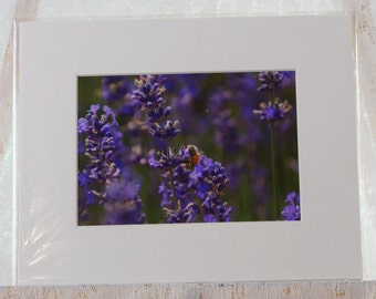 Lavender and bee matted photo