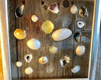 "Shell Window Art Framed Clam Oyster Cockle Jingle Mussel and Angel Wing Shells from Cape Cod 10"" x 10 "" Coastal Wall Hanging Nautical Decor"