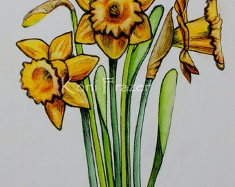 Daffodil painting / spring flowers / original watercolor and ink painting / fine art