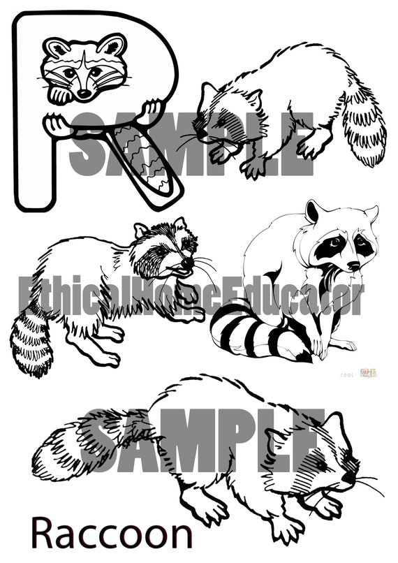 R is for Raccoon colouring sheet Printable