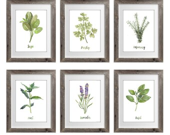 Herb Collection prints Set of 6, Green Herb Watercolor Painting, Sage Rosemary Parsley Lavender Basil Mint, Herbal Home Garden Wall Decor