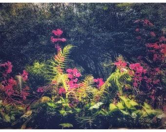 Flowers, wall art, framed photographs, art print, photography prints