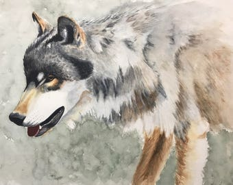 "Wolf. Watercolor. Limited edition giclee print of ""The Yearling"". Wolf"