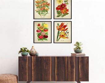Red Yellow Botanical Print Set, Botanical 4 Print Set, Home Decor, Vintage  Illustrations, Flowers Art Reproduction, Floral Print Set m017