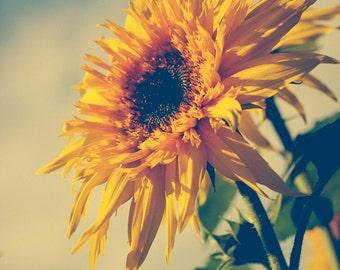 Sunflower photograph . dreamy boho wall art . yellow . floral art print . fine art photograph . happy art . large oversized wall art