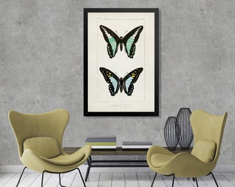 Vintage Butterfly Illustration Print, Butterfly Watercolor Vintage drawing, Butterfly Green and Black water color art, vintage decor [1]