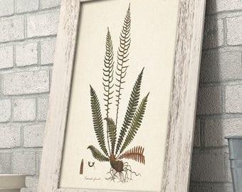 Fern Osmunda Botanical Print - 11x14 Unframed Art Print - Great Gift for Nature Lovers