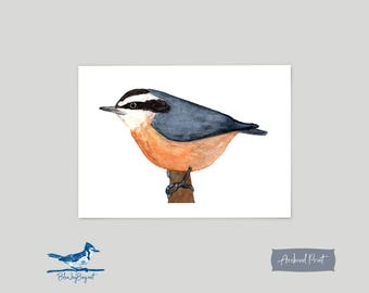 Red Breasted Nuthatch Watercolor Art Print - Bird Lover Mothers Day Gift - Wildlife Animal Art - Nuthatch Print Bird Art - Watercolor Bird
