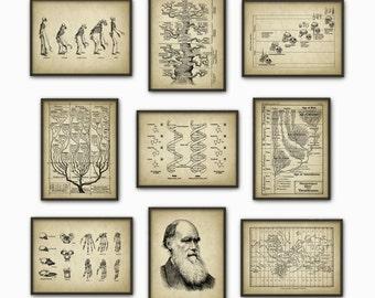 Evolution Wall Art Print Set of 9 - Biology Wall Art - Charles Darwin DNA Tree of Life Apes Skeletons Poster Set - Biology Student Gift Idea