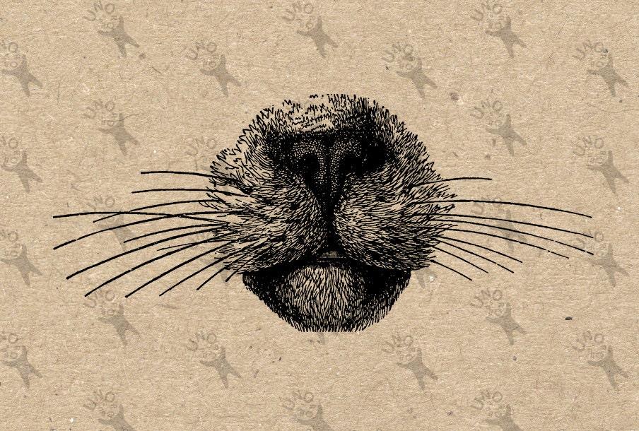 Jahrgang Sassy Katze Nase Bild inländischen Katze Kitty