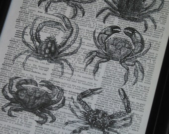 Upcycled Book Page of Crabs on Vintage Dictionary Book Page Print