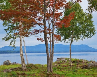 New England Autumn Colors Birch Trees Moosehead Lake Maine Fall Foliage Mountain Background Seasons Red Leaves Colorful Nature Landscape