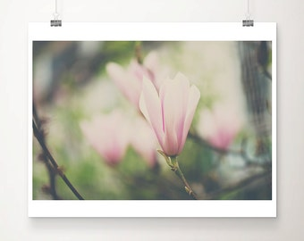 magnolia tree photograph pink magnolia photograph magnolia tree print pink magnolia print pink flower photograph nature photography