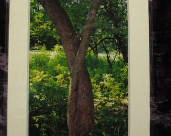 5x7 Matted Photo - Entwined