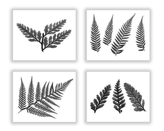 Fern print set botanical print set fern wall art decor