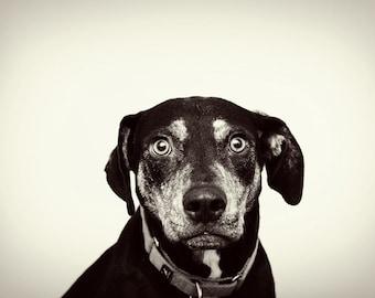 Mug Shot -Hound Dog Photography Print