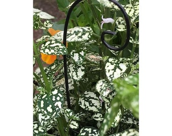 Plain Shepherd's Hook Black Metal 5.25″ Tall x 1.5″ Wide for the Fairy Garden (PLANTS NOT INCLUDED)