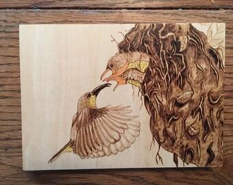Humming bird family in nest