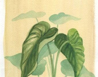 "Taro Plant--ORIGINAL Watercolor painting 11""x7 1/2"""
