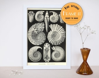 "illustration sea creatures from Ernst Haeckel - framed fine art print,sea life, home decor 8""x10"" ; 11""x14"", FREE SHIPPING 304"