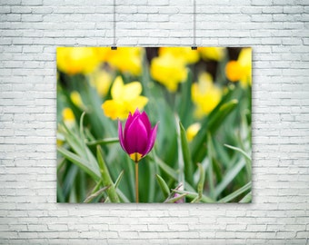 Nature Photography, Flower Art Print, Colorful Home Decor, Large Wall Art, Summer Artwork, Fine Art Photography
