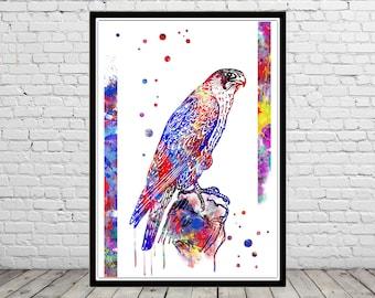 Falcon, Falcon art, watercolor Falcon, Falcon print, bird, wall decor, watercolor bird, Falcon bird, bird art, bird print