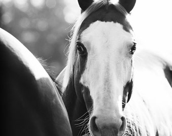 Horse Photography Black and White Horse Art