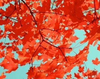 Nature Autumn photograph - Red Autumn Foliage on Turquoise - Wall Art - Fall Wall Art  - Autumn Tree - Nature Art Photograph